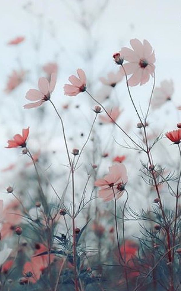 Wildflowers blowing in wind. This particular momen… – #background #blowing #mo