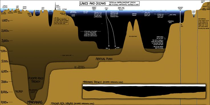 People sometimes forget that oceans contain a lot more than the water people see just beneath the surface.