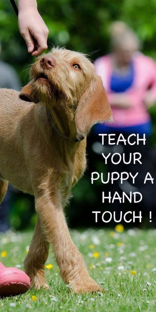 Dog Training For Obedience A Number Of People Give Their Dogs To