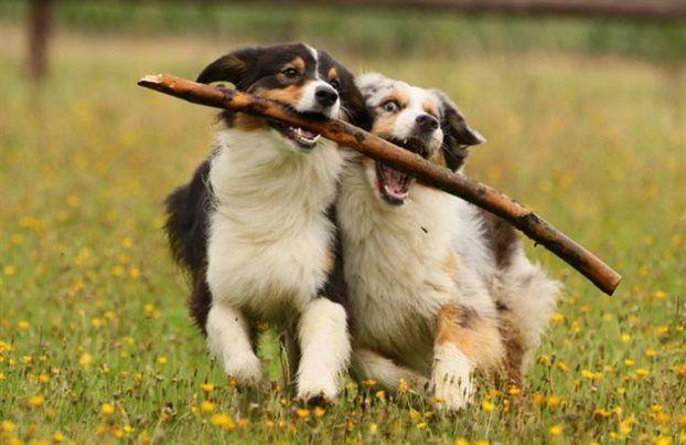 Oι σκύλοι συναισθάνονται αμέσως τους άλλους σκύλους