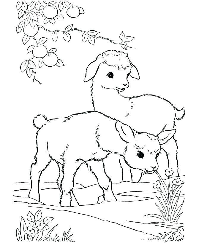 Farm Color Page Farm Animals Pictures To Color Farm Coloring Pages