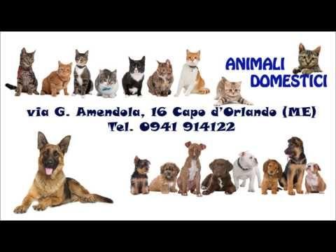 (1) IL Regno degli Animali - YouTube