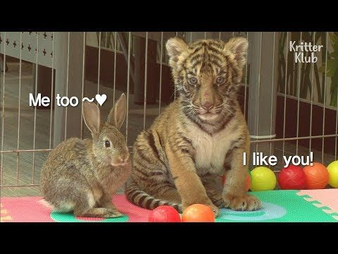 These Besties Are The Cutest Baby Animals In The World | Kritter Klub – YouTube