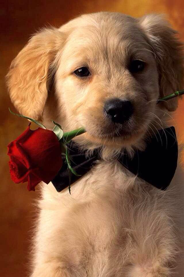 When a dog wants to ask you out he fetes something speshial like a rose