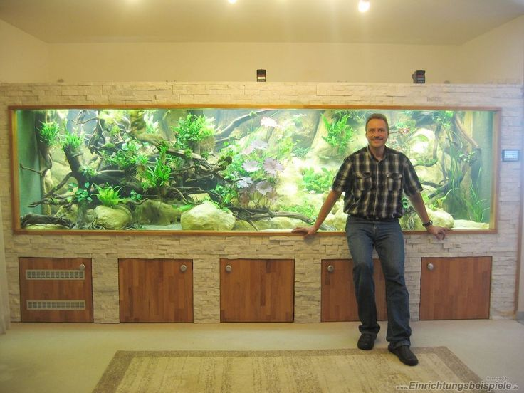 Aquarium einrichtungsbeispiele on pinterest 100 for Meuble aquarium 100 x 30