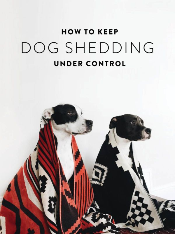 As much time as I spend making my home nice, my dogs don't seem to care. They'll jump on the furniture or roll around on the rugs, and usually it's no big deal, but with summer coming and their furs starting...