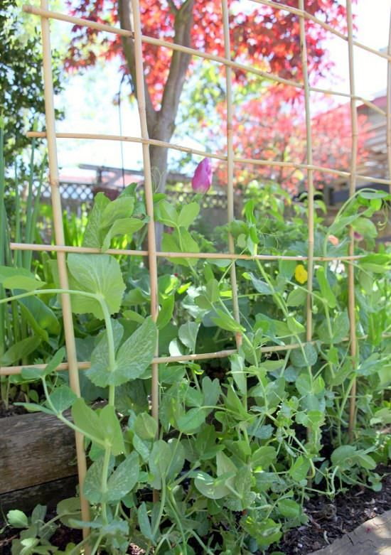 12 Functional Diy Pea Trellis Ideas With Images Bamboo 400 x 300