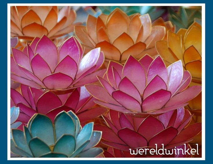 Lotusbloemen.