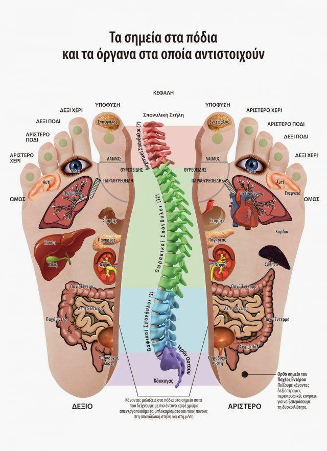 Όλες οι ασθένειες γιατρεύονται από τα πέλματα! Αναλυτικές οδηγίες… Τα τελευταία χρόνια διαπιστώνεται αυξημένο ενδιαφέρον για τις ήπιες, φυσικές και συμπληρωματικές μεθόδους φροντίδας της υγείας. Μια από τις μεθόδους αυτές είναι και η Ρεφλεξολογία. Η Ρεφλεξολογία είναι η επιστήμη η οποία ασχολείται με τα αντανακλαστικά σημεία στα πέλματα και τις παλάμες, που αντιστοιχούν σε κάθε …
