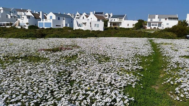 Wild flowers in Paternoster, South Africa