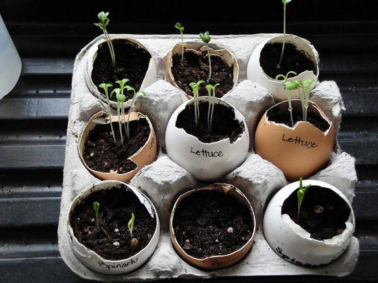 You Should Start Using Eggshells In Your Garden | Garden ...