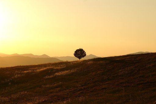 Drzewo, Samotny, Krajobraz, Umbria