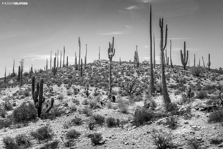 Desert of Baja California Sur  #josafatdelatoba #cabophotographer #landscapephotography #loscabos #bajacaliforniasur #desert #mexico #blackandwhite