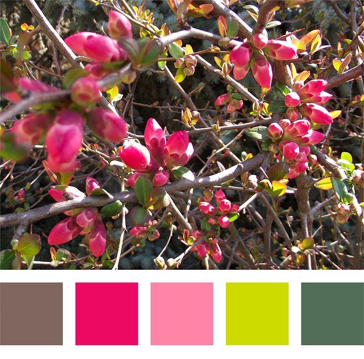 Japán birs - színpalettával #spring #tavasz #sprigcolor #színpaletta #color #flower