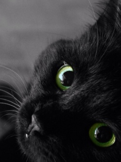raven... the worlds best cat!