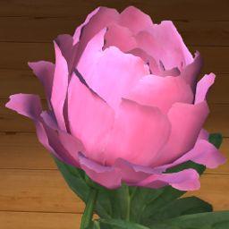 Piwonia różowa 3D www.florysta3d.pl