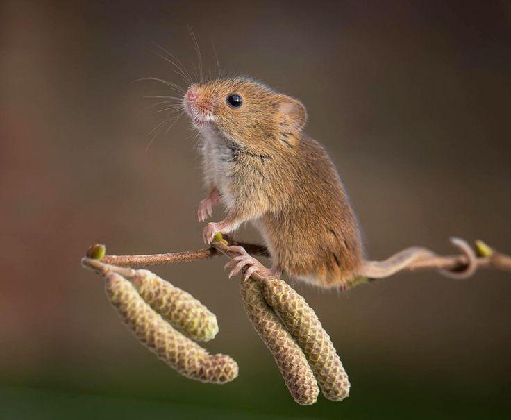 Ces photographies attendrissantes vont vous faire adorer les petites souris | Daily Geek Show