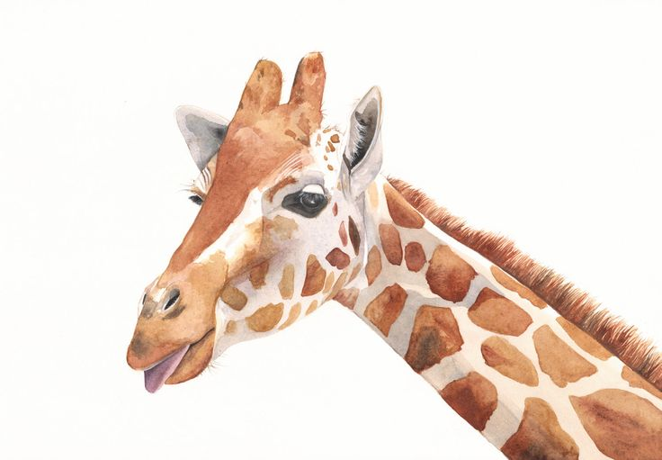 Giraffe Painting G039 print of watercolor painting by Splodgepodge. $15.00, via Etsy.