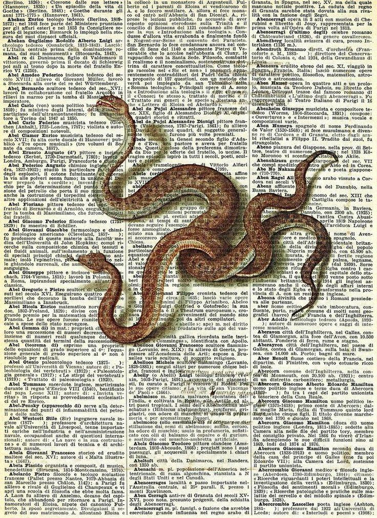 Serpenti - da Kos di Franco Maria Ricci
