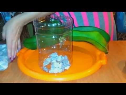 уход и пересадка орхидей-закрытая система - YouTube