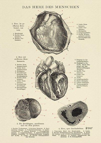 La calidad del corazón humano imprimir archivo - corazón ilustración - Poster de corazón - amor ciencia Poster - Museo