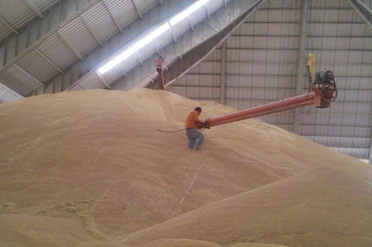 Jaime Rodríguez López, delegado federal de la SAGARPA en Michoacán, informó que en cuanto al cultivo de frijol, se reportó una superficie sembrada de 4 mil 624 hectáreas para el ...