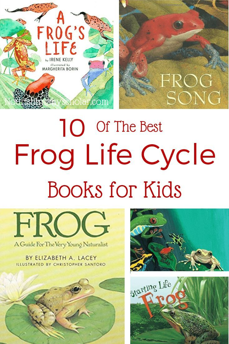 10 Of The Best Frog Life Cycle Books For Kids Books Reading For