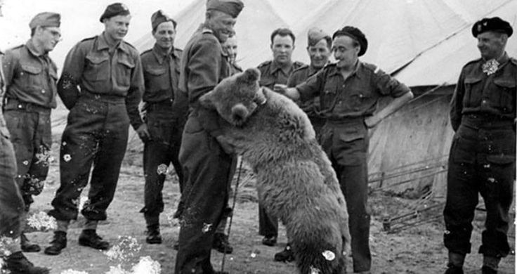 Wojtek The Bear: World War Two's Unlikeliest Hero - http://all-that-is-interesting.com/wojtek-bear?utm_source=Pinterest&utm_medium=social&utm_campaign=twitter_snap