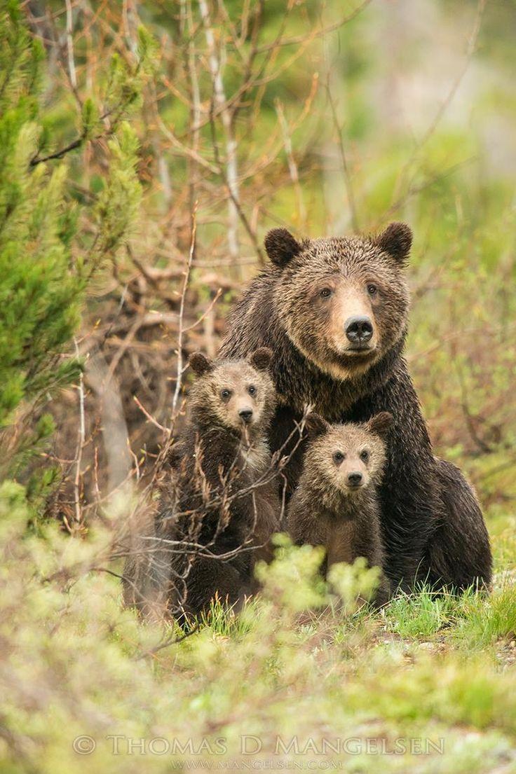 32 best photos by thomas mangelsen images on pinterest mammals