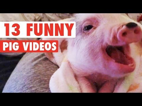 13 Funny Pig Videos || Awesome Compilation - http://funnypetvideos.net/13-funny-pig-videos-awesome-compilation/
