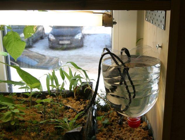 Минипитомник на подоконнике - Жизнь на Природе