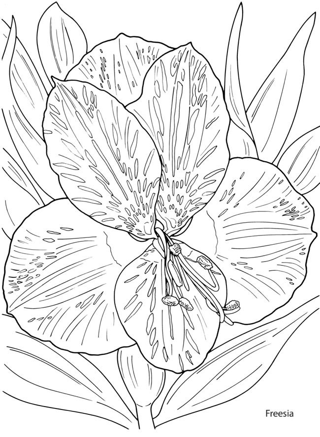 find this pin and more on adolt colouring sheets - Painting Sheets