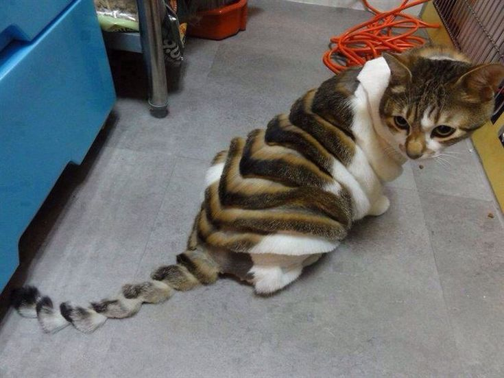 This cat's haircut  Things That Will Make You Feel More Uncomfortable Than You Probably Should 2 - https://www.facebook.com/diplyofficial