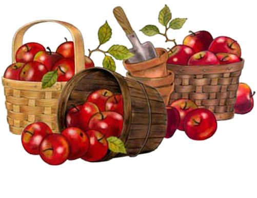apples apple clip art