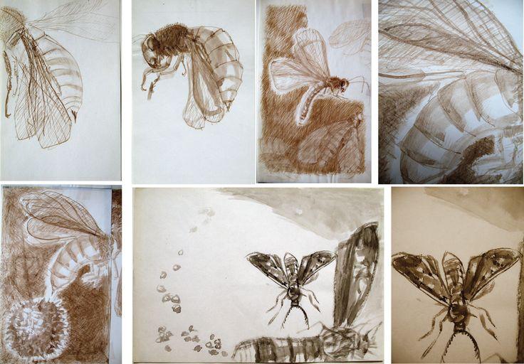 studii insecte