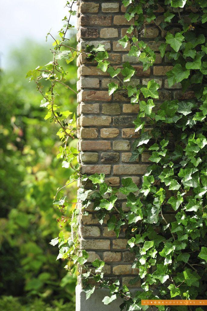 Tuin idee De Rooy Hoveniers landelijke tuin boerderij tuin klimop Dussen