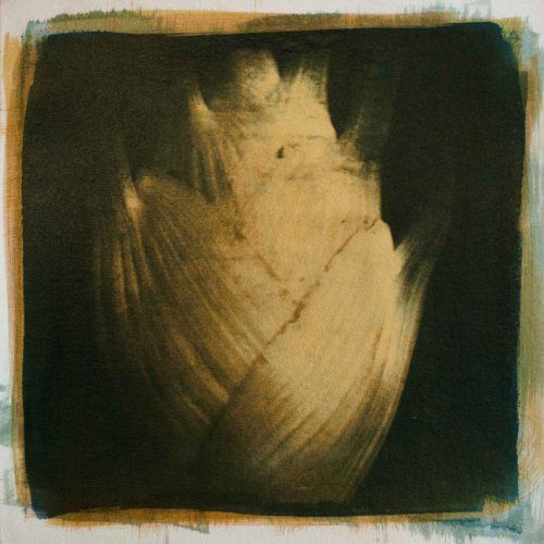 "Fennel Bulb   Fennel Bulb This image from my Kitchen Series is offered as a unique print using watercolor pigment and gum arabic hardened with the bichromate process over cyanotype on watercolor paper. It is 10x10"" on 12x12"" paper and will be shipped flat.  http://www.finelifeart.com/fennel-bulb-2/"