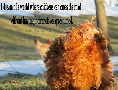I dream of a world where chickens can cross the road without having their motives questioned. ~The Chicken Chick