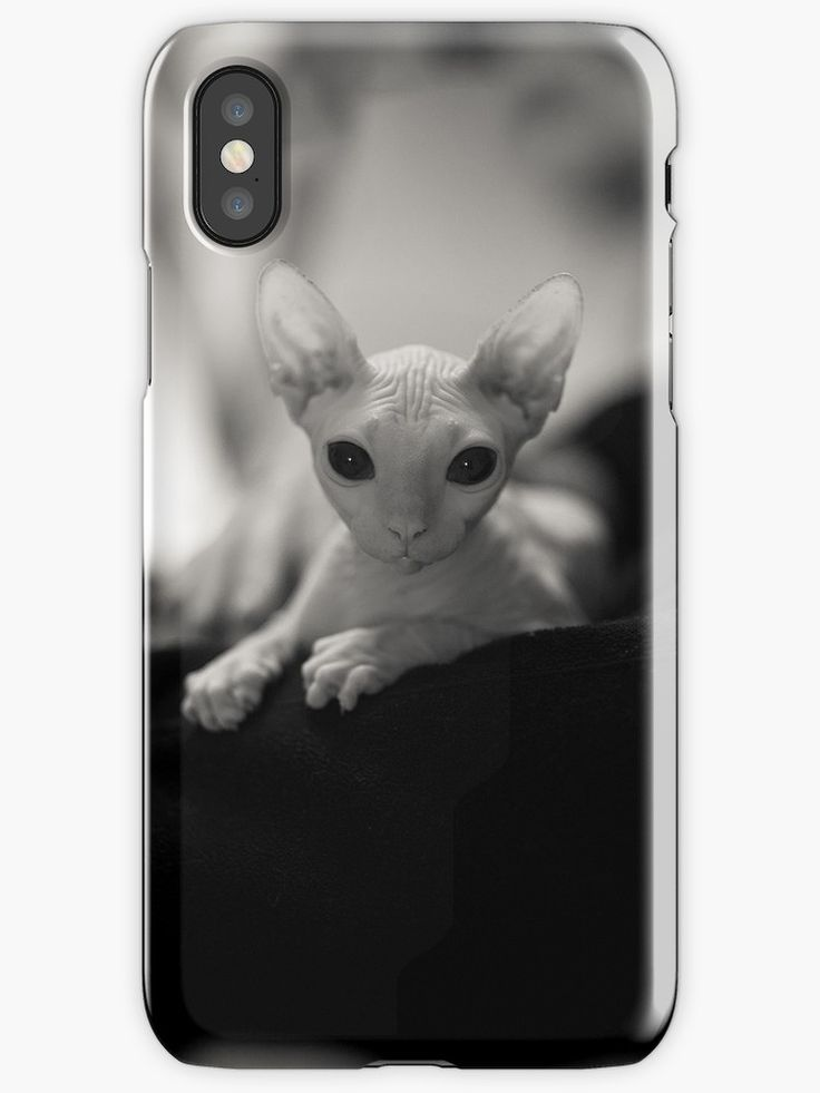 "$26.50 - ""Angel Eyes"" iPhone Case/Skin depicting beautiful Sphynx kitten with huge eyes #sphynx #cat #catlady #iphonecase"