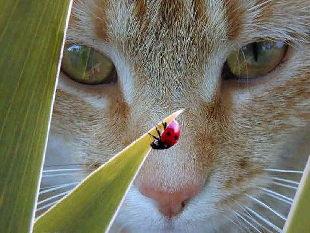 Love the way the stripes go in this photo......on the head and repeated in the plant! Nice work!