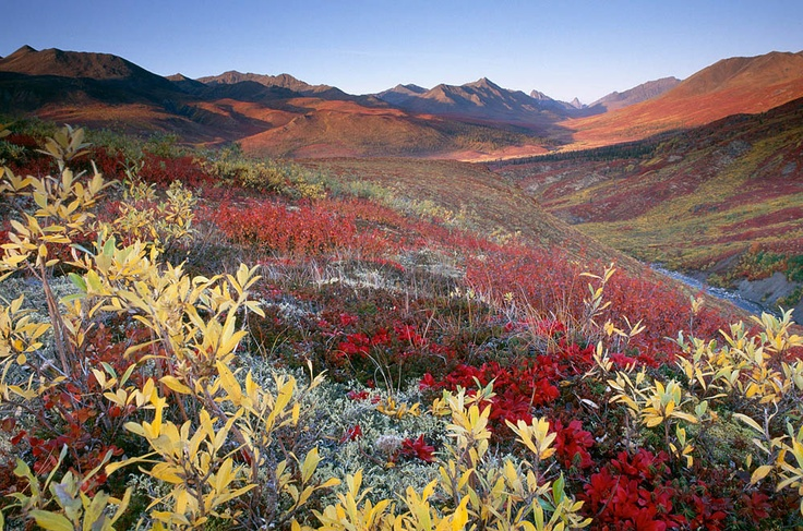 Dempster Highway, North Klondike The Dempster Hwy is a beautiful drive year round but fall, inparticular, is incredible.