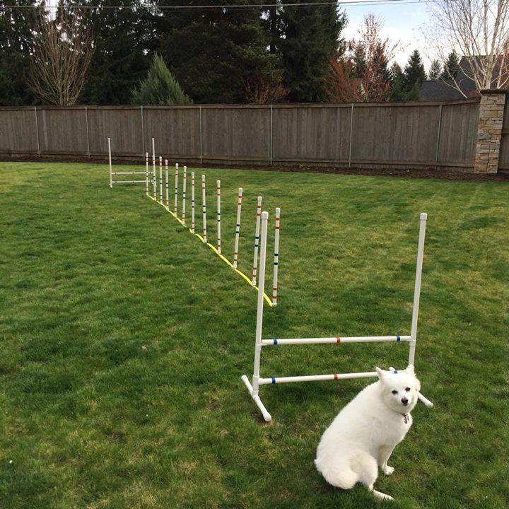 how to make dog agility equipment
