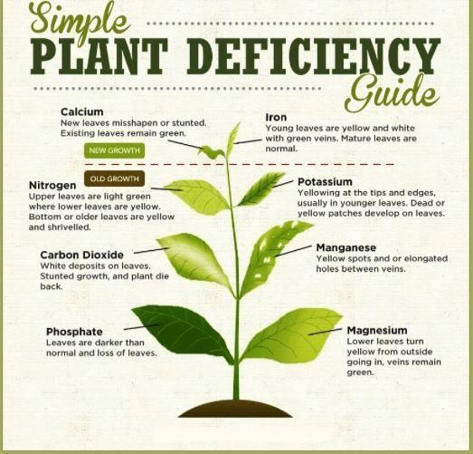 Infographie des petits bobos des plantes
