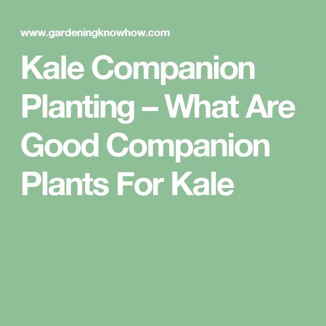 Kale Companion Plants: Learn About Plants That Grow Well ... Companion Planting Kale