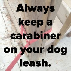 16 simple pet hacks every dog owner should know