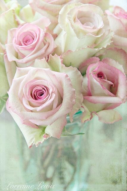 Pretty pink ruffled roses!