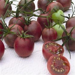 Chocolate Cherry Tomato Cherry Tomato Plant Black 640 x 480