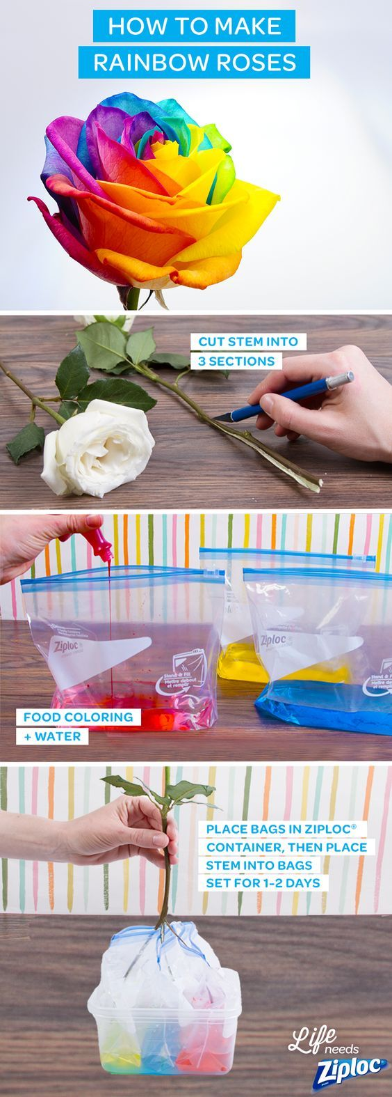 Brighten up your house with these gorgeous rainbow roses. It's simple: just spilt a stem 3 ways (use a knife with parental supervision), then dip into 3 Ziploc® Slider bags filled with different-colored dyes. An inexpensive and DIY way to make mom's day or a great rainy day craft to do with the kids.: