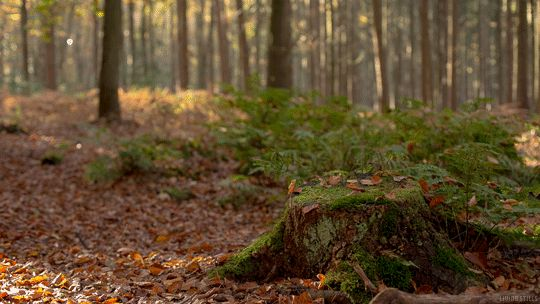 cinemagraph gif gif nature cinemagraph perfect loop cinemagraphs living stills
