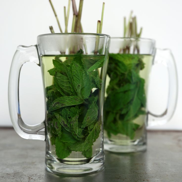 Mint Tea Tastes So Fresh and So Green